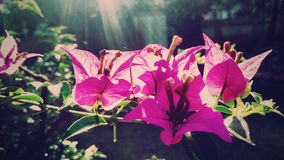 Flower. A beautiful pink flower Stock Images