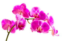 Flower beautiful pink orchid Stock Photos