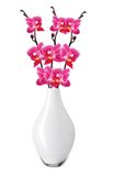 Flower beautiful pink orchid - phalaenopsis in vase isolated Stock Photo