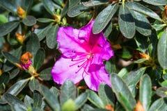 Flower with beautiful purple flower.  stock photo