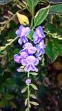 Flower. Beautiful Purple orchid mesmerizing Royalty Free Stock Photo