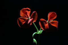 Flower beautiful Royalty Free Stock Images
