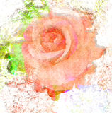 Flower beautiful rose, art paint illustration for background Stock Images