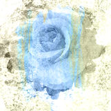 Flower beautiful rose, art paint illustration for background Stock Image