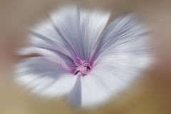 The flower. A beautiful, soft, purple flower Stock Photos