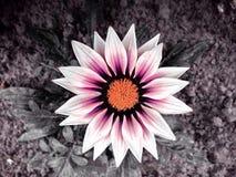 Flower. Beautiful summer flower Stock Images