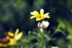 Flower. Beautiful yellow flower on green background Stock Image