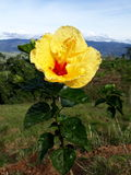 Flower0000. A beautiful yellow flower at mountains stock photos