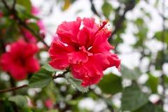 Flower. Beauty of flower stock image