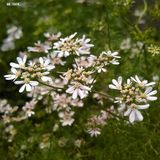 Flower. Beauty nature natural garden Royalty Free Stock Photo