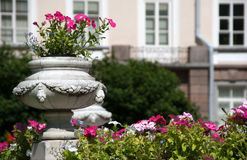 Flower-bed. In front of the palace in a summer garden Royalty Free Stock Images