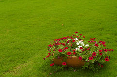 Flower bed. Colorful flower bed on a green grass Stock Images