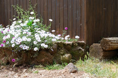Flower bed. Rustic flower bed in rural style Royalty Free Stock Images