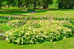 Flower bed. In park, Moscow, Russia, East Europe royalty free stock images