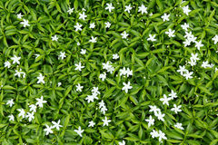Free Flower Bed Stock Photos - 41854443