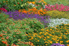 Flower Bed. A colorful bed of flowers shot with a shallow depth of field Royalty Free Stock Images