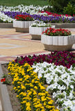Flower bed. On a city street Stock Images