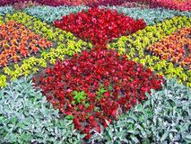 Flower bed. Excellent flower bed in park Stock Photography