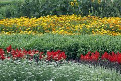 Flower bed with annuals in summertime stock images