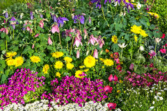 A flower bed with beautiful blossoms. A flower bed with beautiful blossoms of differnt perennial plants in the garden Stock Photography