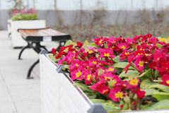 Flower bed and benches. In the park, leisure flower bed and benches Stock Photo