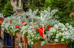 A flower bed with blooming flowers on the fence of one of the pavement cafes in Lviv Royalty Free Stock Photo