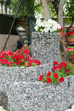A flower bed of blooming petunias for the stones. Design solution for the design of flower beds. Stock Photography