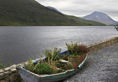 Flower bed in a boat. National park Connemara. Royalty Free Stock Photo