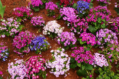 Flower bed in botanical garden Royalty Free Stock Photography