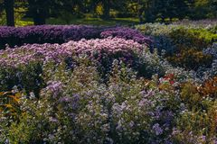 Flower bed with bright colourful flowers in garden royalty free stock image