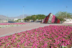 Flower bed in the city of Fujairah Royalty Free Stock Photography