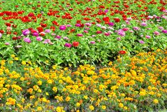 Flower bed in the city Park. Flower bed in city Park, in Biysk, Russian royalty free stock image