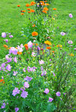Flower bed Royalty Free Stock Image