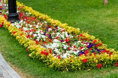 Flower bed with colorful flowers. In the park royalty free stock image