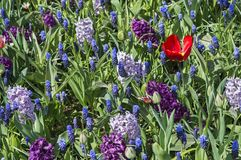 Colorful mosaic of spring flowers Stock Image