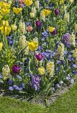 Colorful mosaic of spring flowers Stock Photo