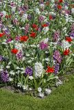 Colorful spring flowers Stock Images