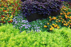 Flower Bed Stock Images