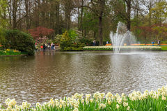 Daffodil foreground in the park at Keukenhof with fountain. Flower bed of white and yellow daffodil in the park at Keukenhof royalty free stock images