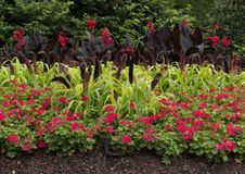 Flower bed at the Dallas Arboretum and Botanical Garden. Pictured is a colorful flower bed at the Dallas Arboretum and Botanical Garden.  From front to back are Royalty Free Stock Photography