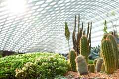 Flower bed with different kinds of cactuses at sunlight. Royalty Free Stock Photography