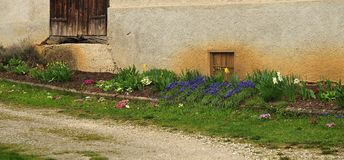 Flower bed at facade of old farmhouse with spring flowers royalty free stock photography
