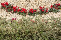 Flower bed with flowers stock images