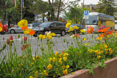 Flower bed with flowers beside the road Stock Images