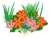 A flower bed of flowers. Royalty Free Stock Photography