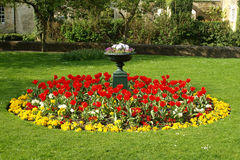 Flower Bed in a Formal Garden. Flower bed of Tulips and Pansies in a formal garden Royalty Free Stock Photography