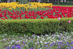 Flower bed in formal garden Royalty Free Stock Photography