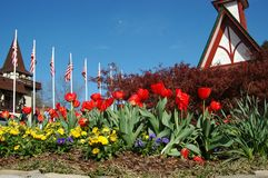 Flower bed royalty free stock images