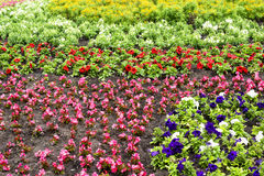 Flower bed full of flowers. The fragment of hand-made flower bed full of blossom flowers Royalty Free Stock Photography