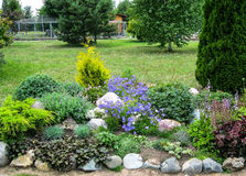 A flower bed in the garden. Royalty Free Stock Image